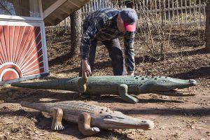 Veikko Koukonen auttaa krokotiilit kesäksi pihamaalle.