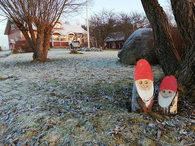 Joulukuusen hakumatkalla Mukkulan maatilalla