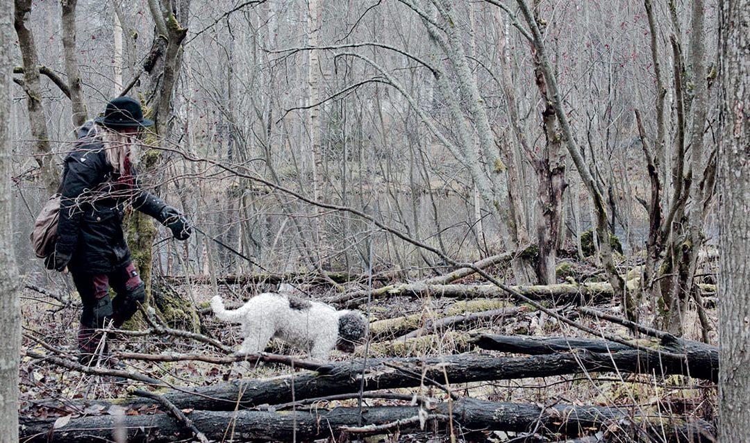 Tryffeleiden metsästäjä Tihusniemeltä